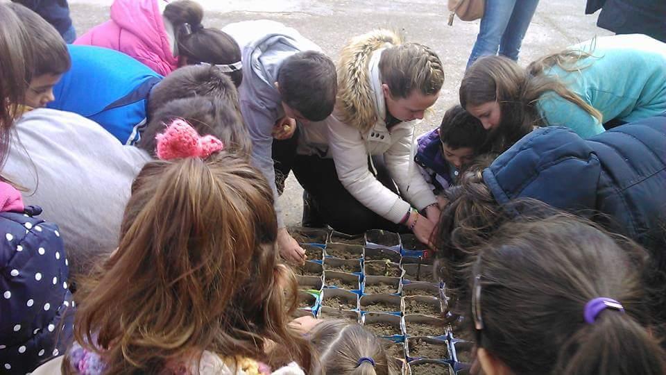 plantando arboles colegio eusebia palomino