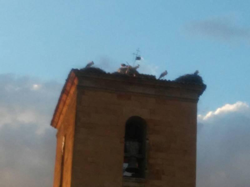 caida nido iglesia cantalpino