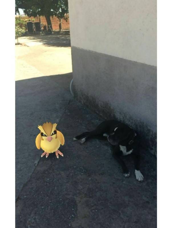 Pokemon Go Cantalpino